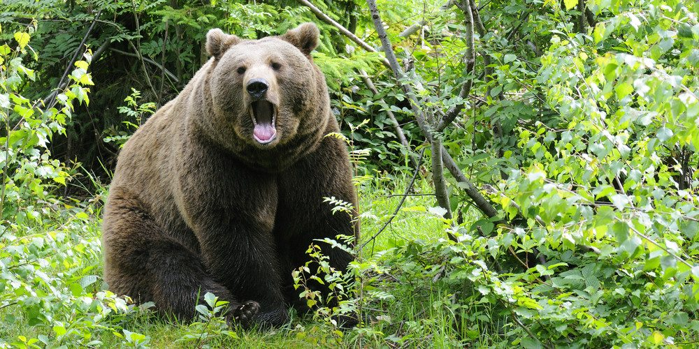 Hiking in Bear Country: Tips to Stay Safe