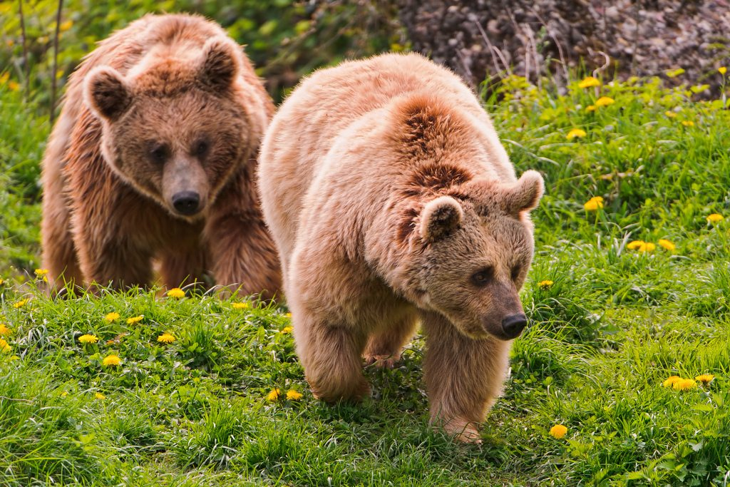 6 Times Bear Spray Went Very Wrong