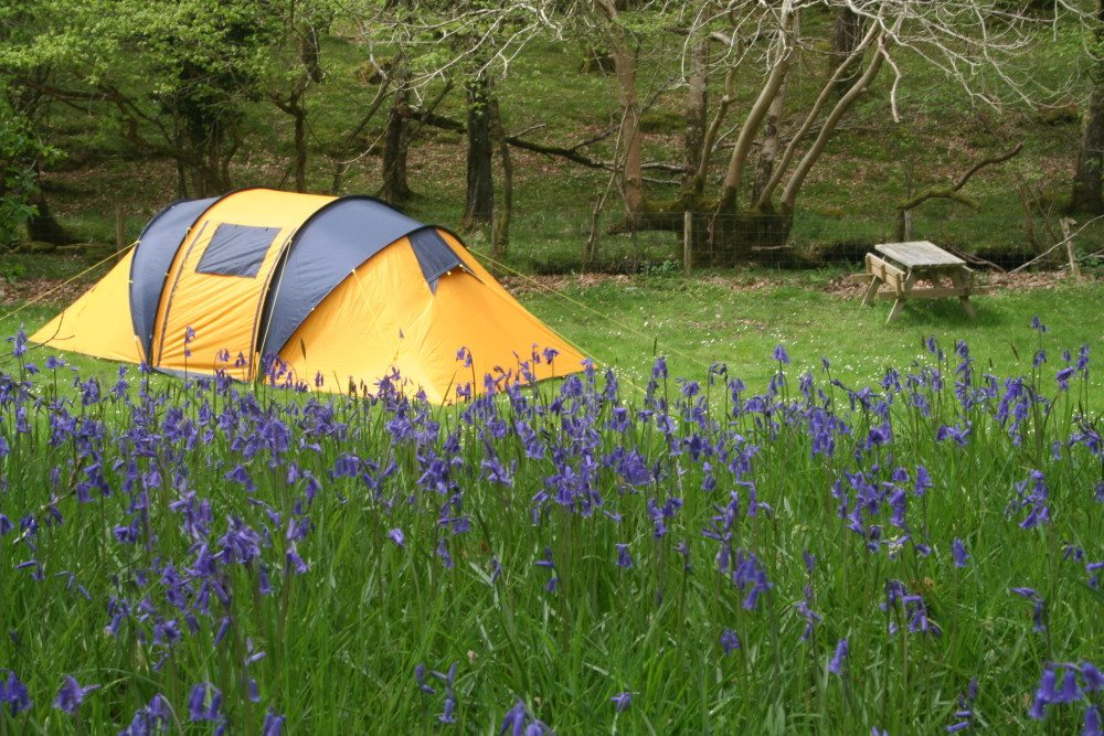 10 Reasons to Camp in Spring vs. Summer