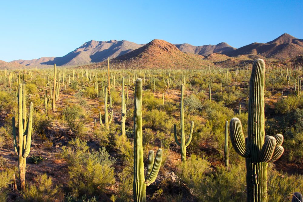 7 Places to Hike Before It Gets Too Hot