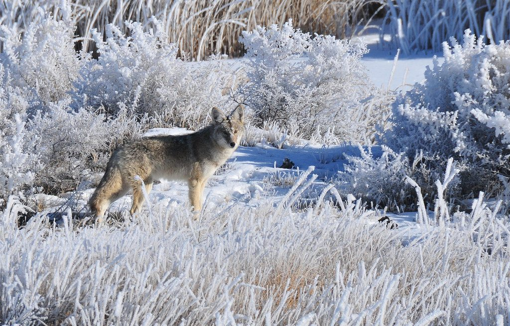 5 Stunning Wildlife Trails to Hike this Winter in Colorado