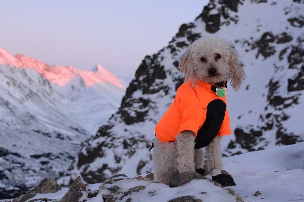 Take Your Dog Winter Camping with These Amazing Items